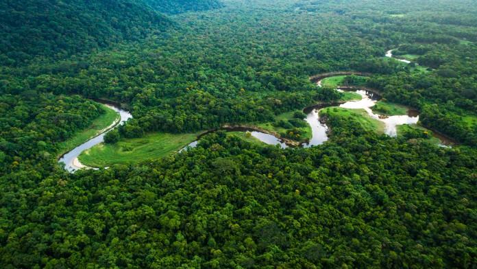 Fluss im tropischen Regenwald