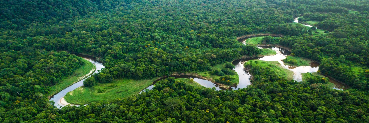KfW and WWF support Brazil in the reforestation of 12 million hectares