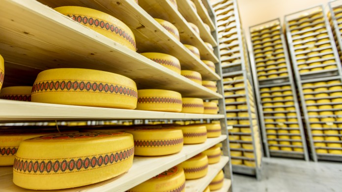 many yellow cheese wheels on wooden shelfs